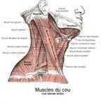 Planche d'anatomie